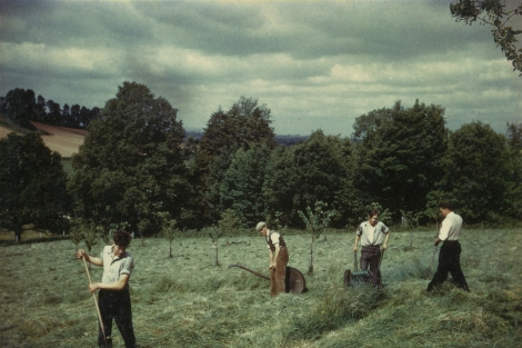 Hay making in the orchard